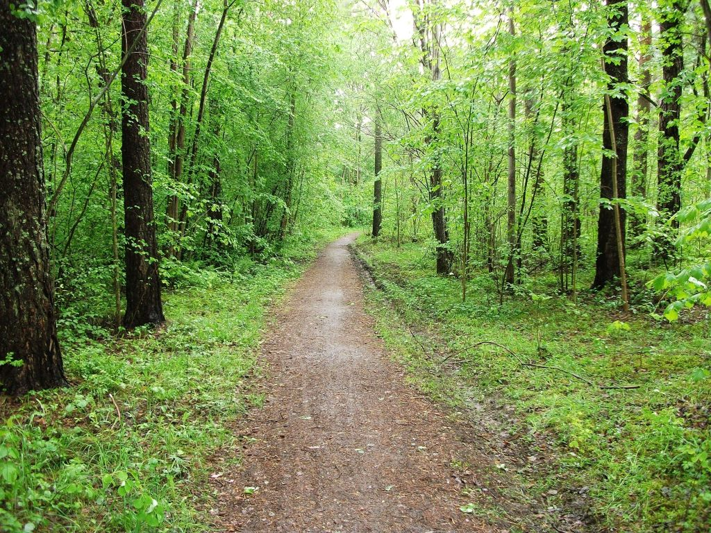 Uppsala Woods